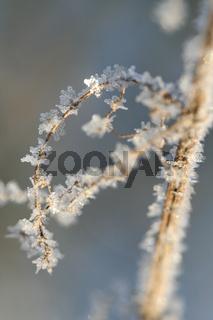 Eiskristalle an Zweigen