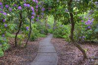 Tiergarten Rhododendronhain