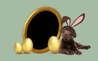 a chocolate labrador puppy with furry Easter ears