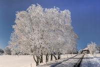 Die Winterbaeume an der Dorfstrasse