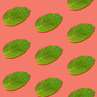 Seamless pattern of mint leaves on pink