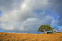 African savannah landscape with trees in grassland with a cloudy sky