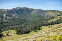 scenery at Mt Washburn trail in Yellowstone National Park, Wyoming, USA