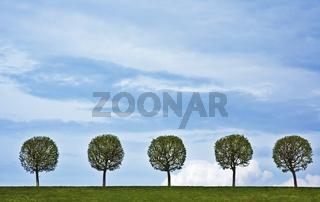 5 trees