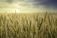 crop on field against sky