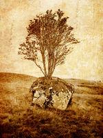 Grunge tree