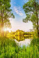 Morning sun on pond