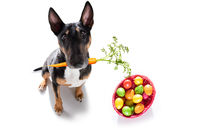 easter holidays dog with eggs