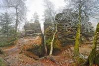 Sandsteinfelsen im Elbsandsteingebirge mit Raureif im Nebel -  Sandstone rocks in the Elbe Sandstone Mountains with hoarfrost in the fog