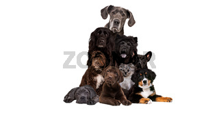 bunch of different dog breeds