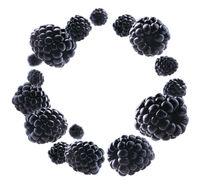 Ripe blackberries levitate on a white background