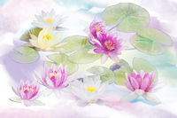 Pink and white Water Lily flowers . Digital painting.