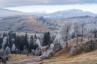 Winter coming. Picturesque foggy and moody morning scene in late autumn mountain countryside with hoarfrost on grasses, trees, slopes. Ukraine, Carpathian Mountains.