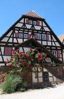 Rosen an einer Treppe im Kloster Maulbronn