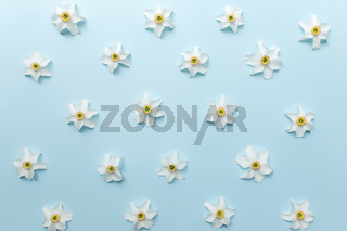 Summertime concept on blue background with flower heads of daffodil