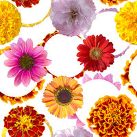 Seamless floral design with colorful flowers . Endless pattern. Digital illustration.