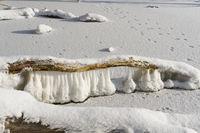 Ast eines Baumes über einem zugefrorenen See im Winter