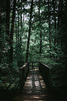 Footpath through the forest