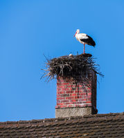 White stork couple in their nest on a chimney