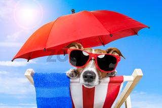 dog sunbathing