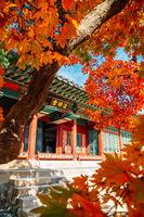 Deoksugung Palace with autumn maple in Seoul, Korea