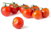 Ripe fresh cherry tomatoes on branch