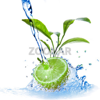 water drops on lime with green leaves isolated on white