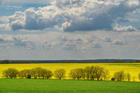 Clouds at blue sky above agricultural fields