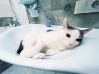Funny cat in bathtub sink