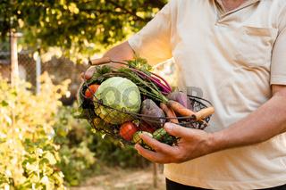 The little farmer holds a basket of fresh vegetables