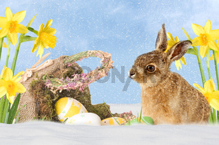 Easter bunny with Easter Baskets in snow