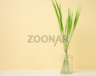 glass vase with green ears of wheat on white table