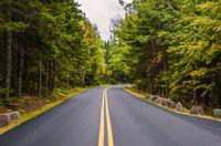 Straße durch den Acadia National Park, Maine, Neuengland, USA, Nordamerika
