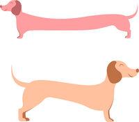 dachshund, wiener dog on white background