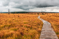 Landscape in the High Fens Nature Park in the Eifel