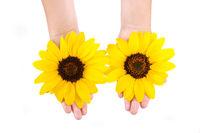Sunflowers in hands