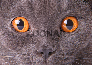 Close up a cat face