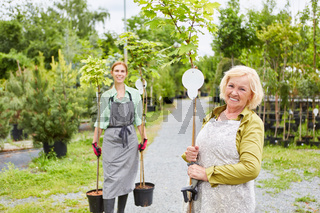 Gärtnerei Team mit Kugelahorn zum Umpflanzen
