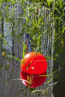 Orange sea buoy in the water