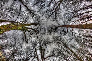 Blick durch die Baumkronen