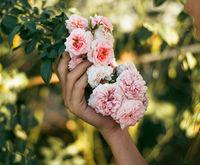 bouquet of flowering rosehip in hand