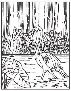 A Flamingo Wading in Subtropical Wilderness of Everglades National Park Florida United States Mono Line or Monoline Black and White Line Art