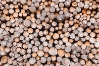wood in pile outdoor , texture background