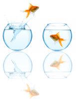 goldfish leaping in aquarium