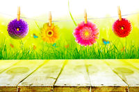 Spring and summer panorama with gerbera flower.