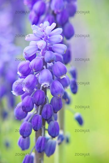 Blüten zur Frühlingszeit