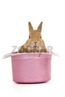 Süßes Kaninchen im Hut auf weiß