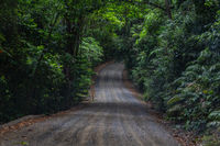 In the jungle of Daintree National Park in Queensland, Australia