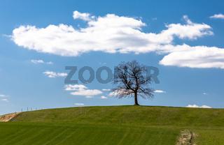 Einsamer Baum bei Muensing in Bayern