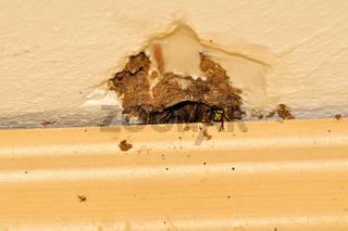 Wasps / Wespen
